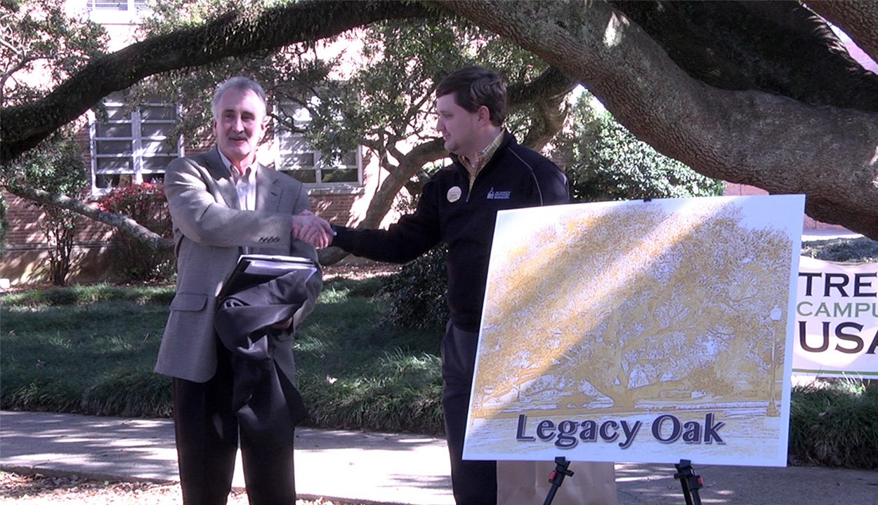 USM community names oldest oak on campus